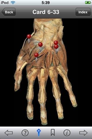 Rohen anatomy flash cards