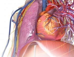 Top 4 iPad anatomy medical apps