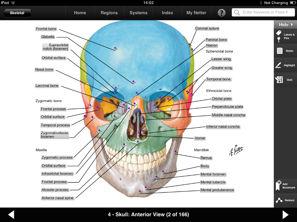 Netters Anatomy Flash Cards Online Wiring Diagrams