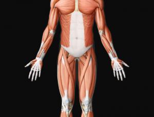 Virtual Body Human Anatomy is an impressive 2D anatomy app