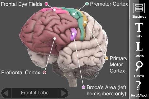 3d brain by cold spring harbor laboratory iphone app review3d brain app is free, fun to use, and useful at the same time [app review]