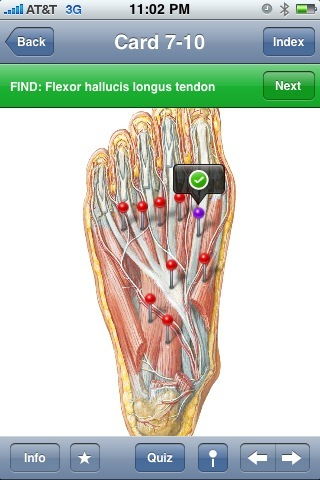Netters Musculoskeletal Flash Cards Iphone App Review