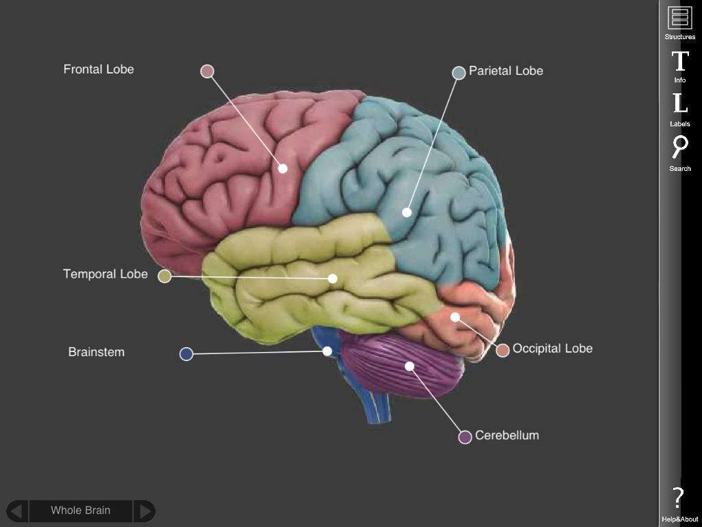 3D brain app is on the iPad - it\'s still free and fun to use