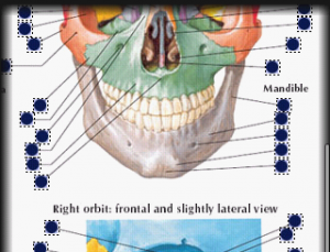 Netter's Atlas of Human Anatomy comes to life on the Android platform [App Review]