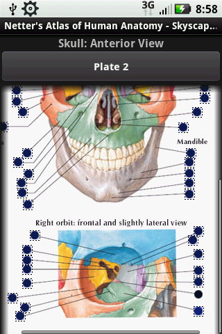 Netter S Atlas Of Human Anatomy App Comes To Life On The