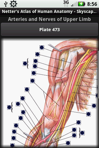Netter\'s Atlas of Human Anatomy app comes to life on the Android ...