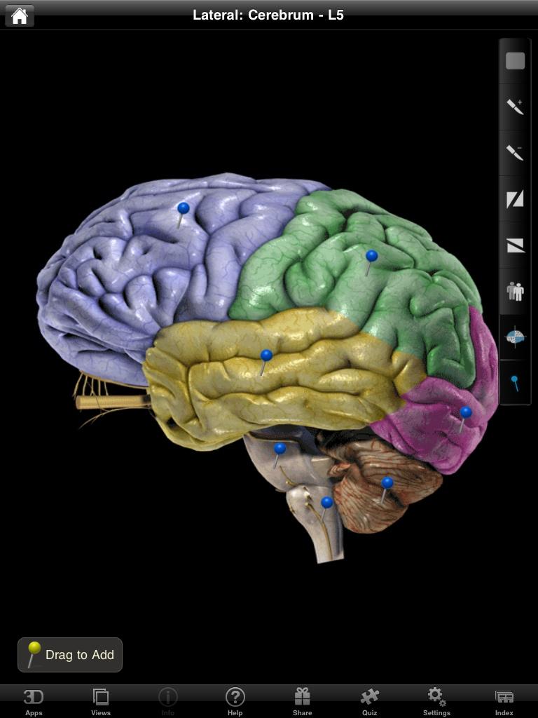 NOVA Series Proves Its Worth With Brain Pro iPad Anatomy App