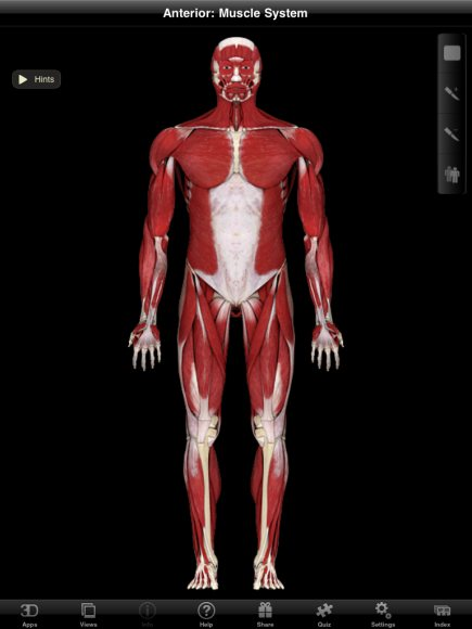 muscle system pro ii is one of the best apps for gross muscle anatomy, Muscles