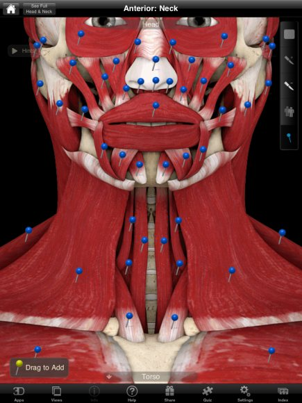 Muscle System Pro Ii Is One Of The Best Apps For Gross Muscle Anatomy