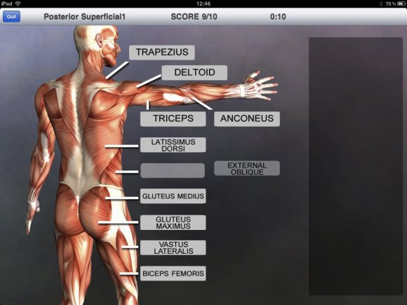 muscle & bone anatomy 3d is a great anatomy app for medical students, Muscles