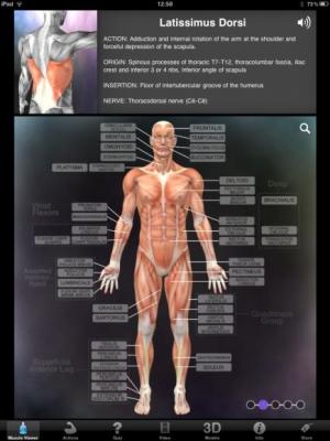 MuscleBone3D_alt