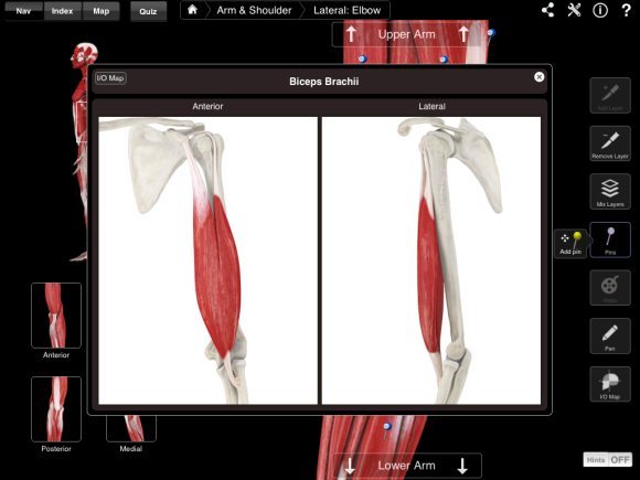 Muscle System III is an impressive update to 3D4Medical NOVA app