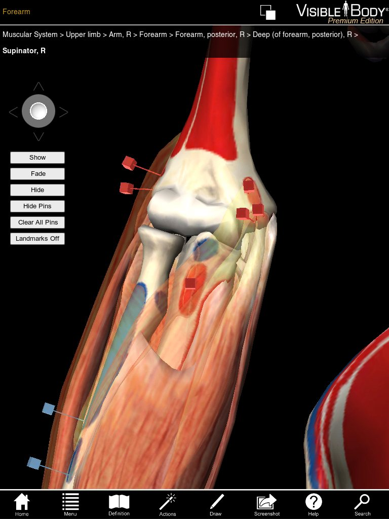 3D Muscular Premium Anatomy for iPad pushes boundary for