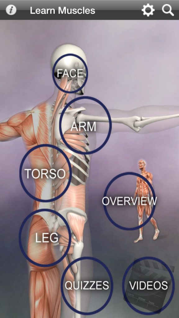 Learn Muscles Anatomy App Is A Good Tool But Not For Everyone