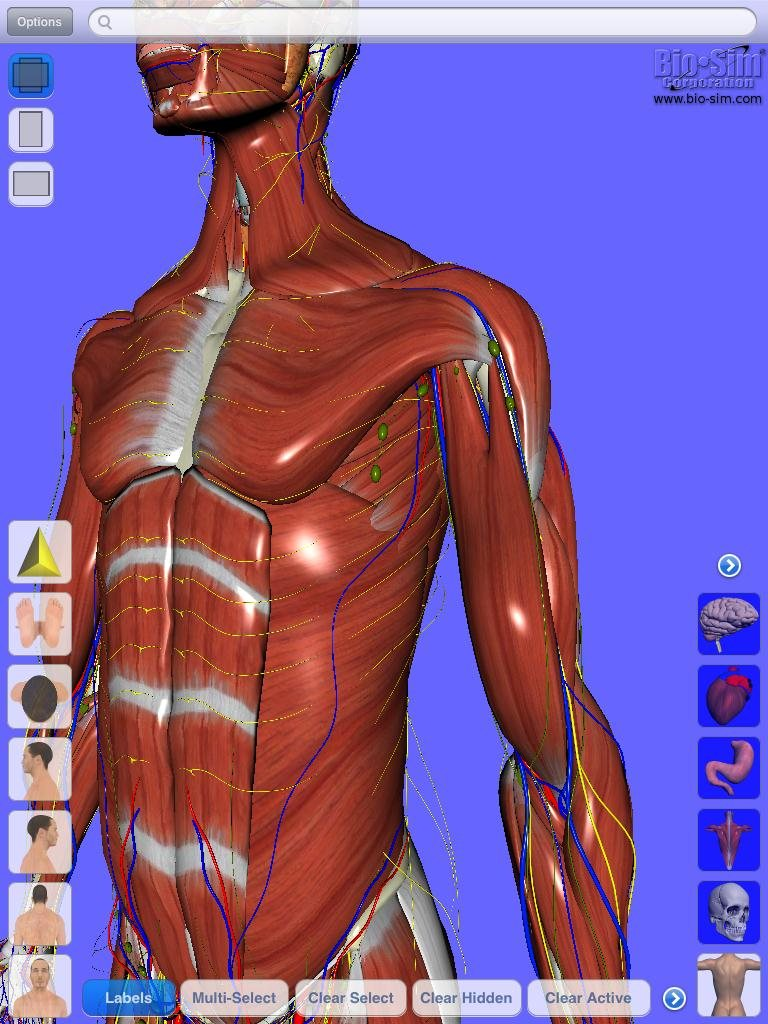 Grey\'s Grey\'s Anatomy uses Digital Human anatomy browser app, but is ...