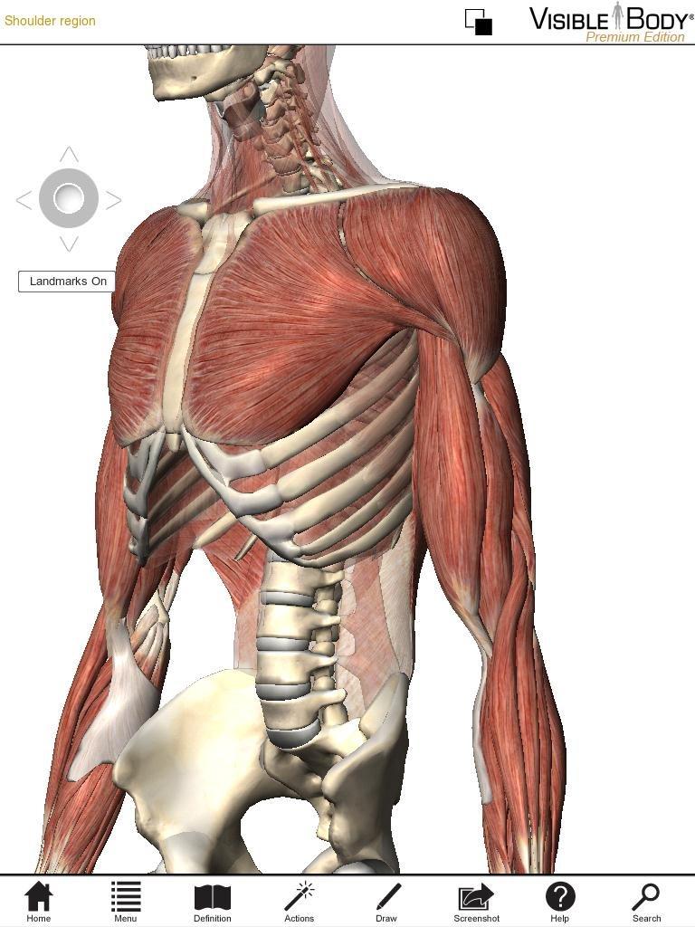 Grey\'s Grey\'s Anatomy uses Digital Human anatomy browser app, but is ...