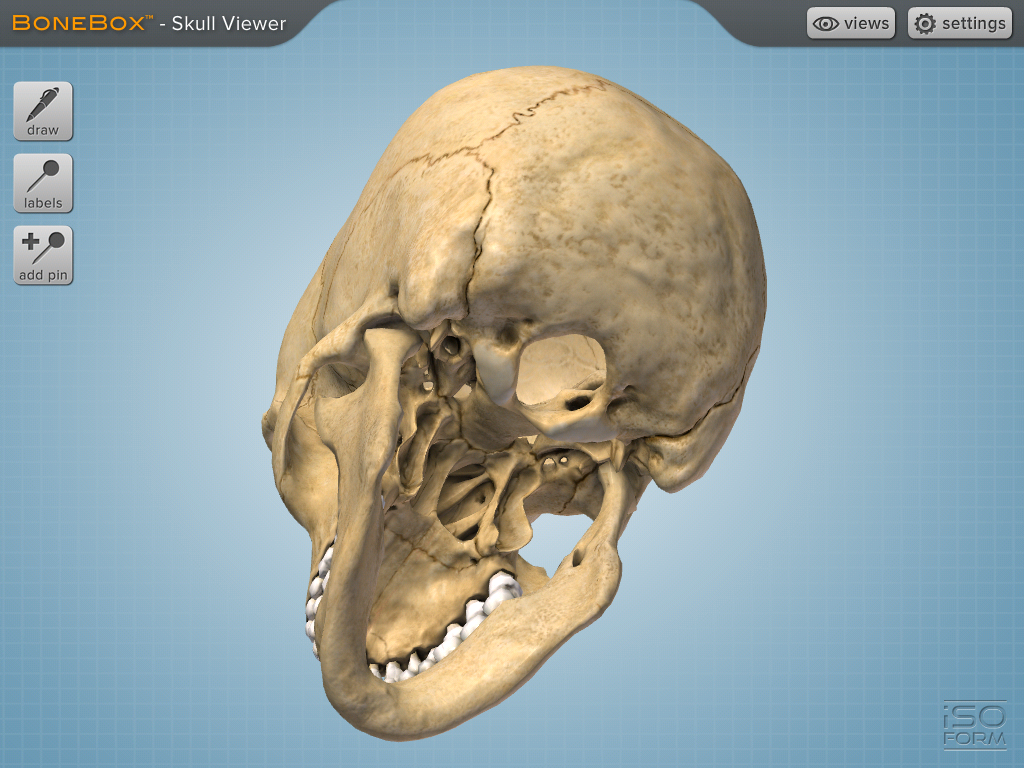 BoneBox Skull Viewer app for iPad is a 3D medical education tool