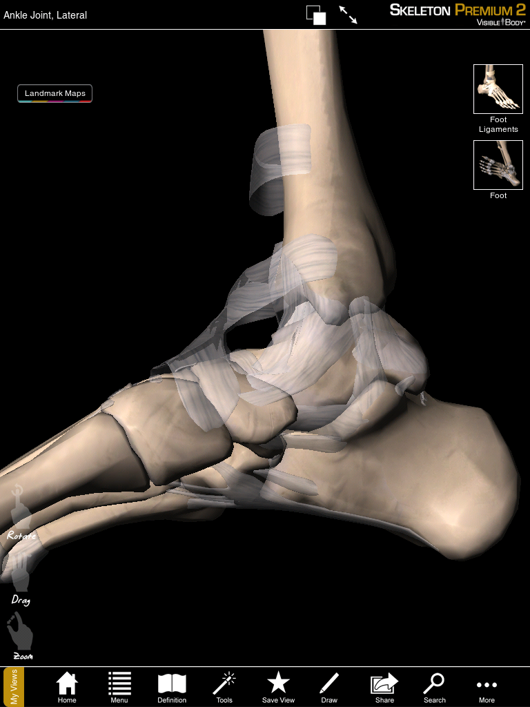 Skeleton Premium 2 app from Visible Body brings 3D anatomy models ...