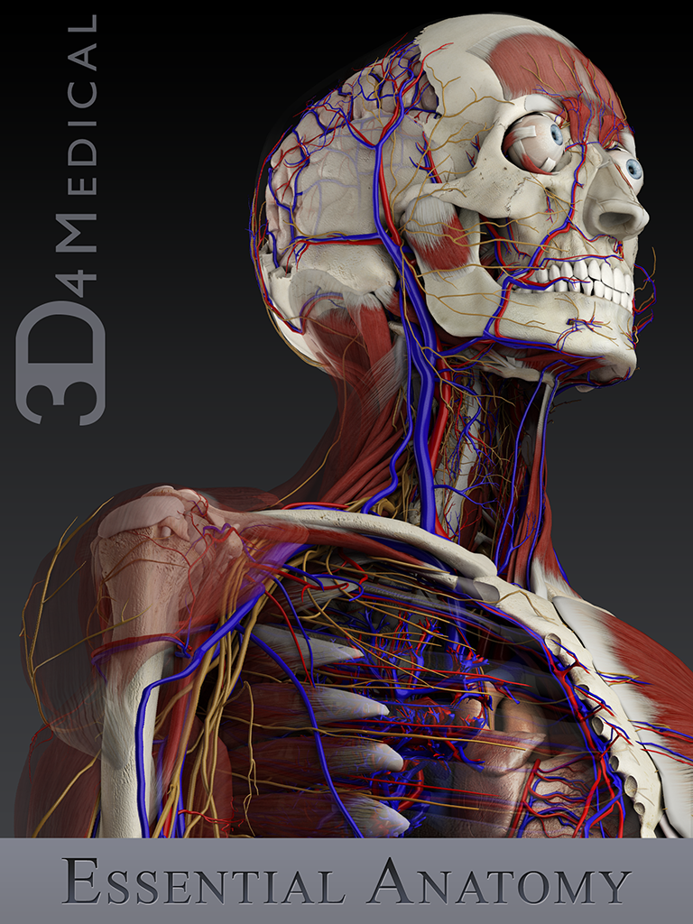 3D4Medical prepare to launch unique 3D essential anatomy app ...