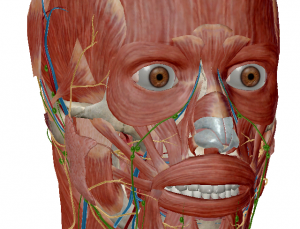 Visible Body Human Anatomy Atlas app updated to include microanatomy and greater detail