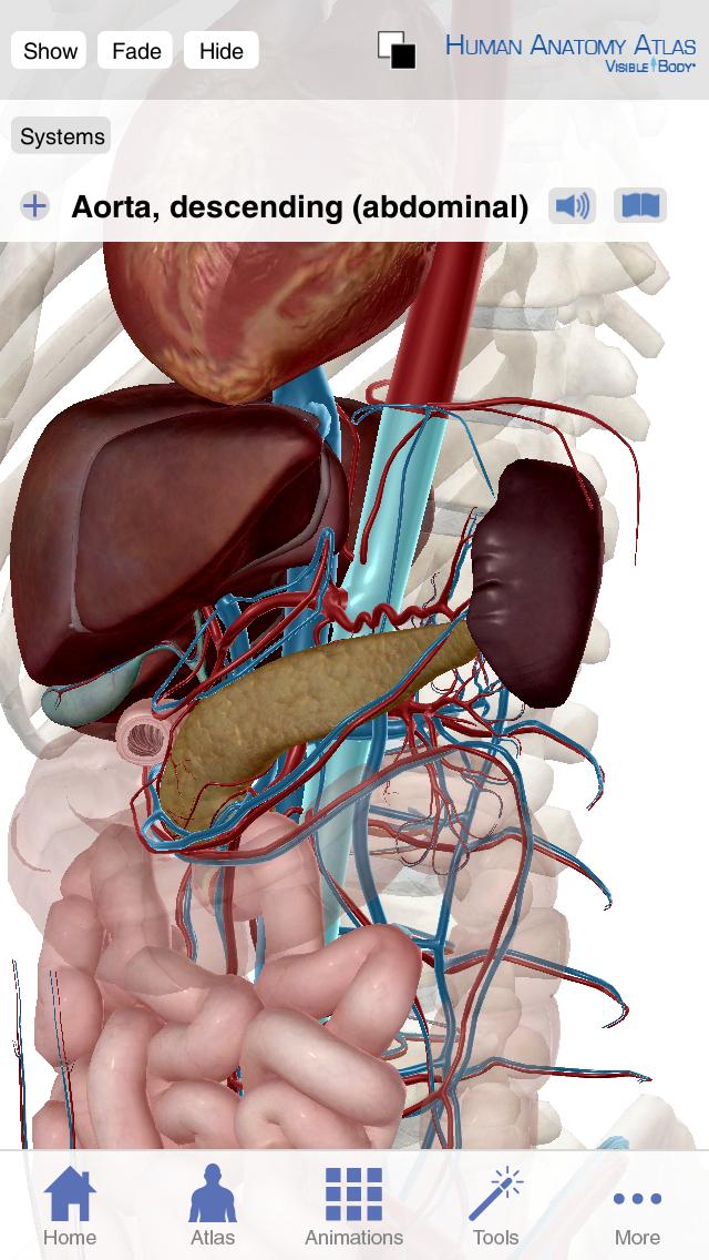 Visible Body Human Anatomy Atlas Iphone And Ipad Medical App Review