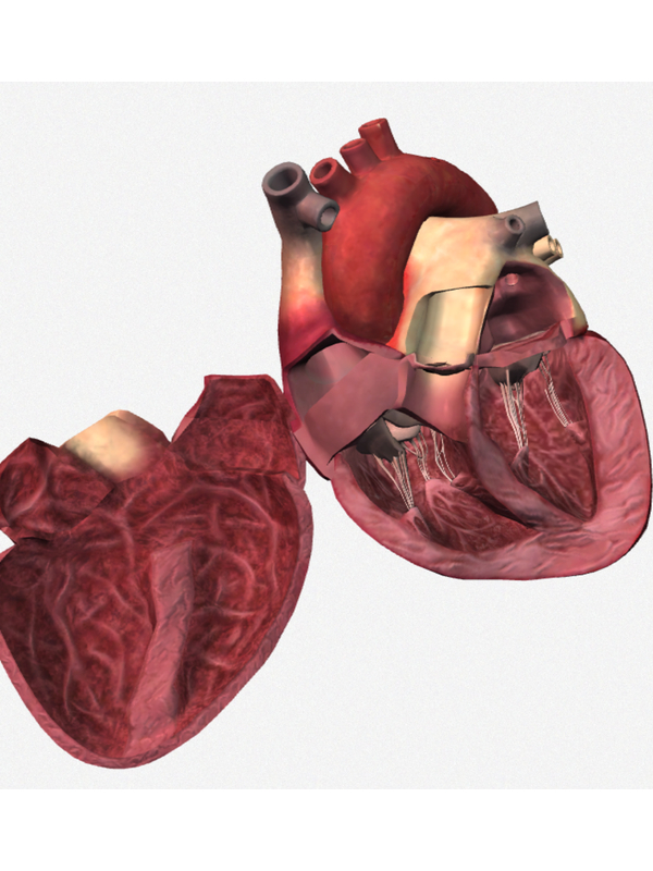 Top 10 Cardiology Apps For Cardiologists And Internists