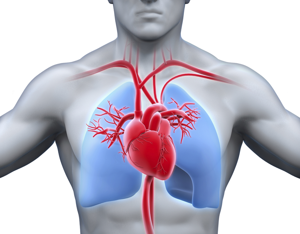Lung congestion monitor shows benefit in heart failure